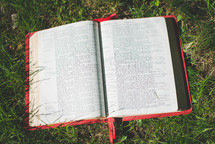 Bible in the grass