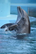 playful dolphin