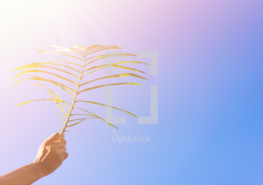 holding up a palm frond in bright sunlight