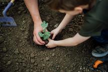 planting in a garden