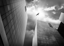 bird flying between city buildings