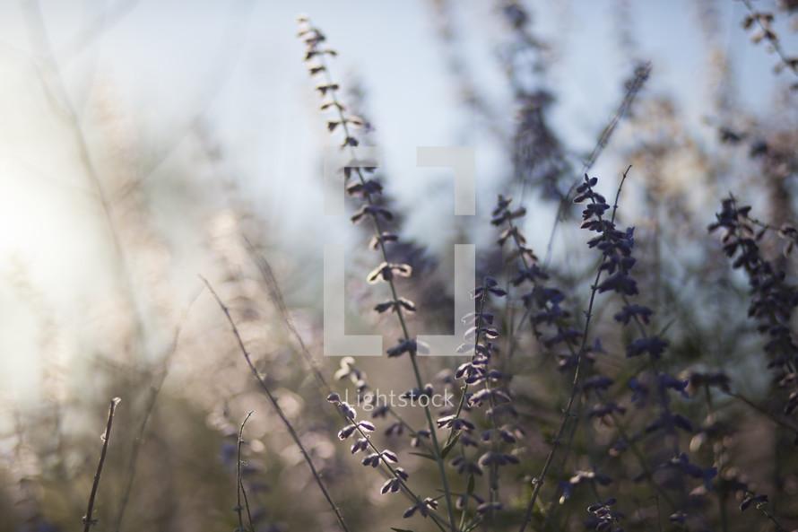 sunlight on wildflowers
