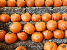 pumpkins on hay stacks