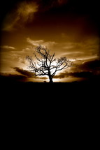Barren tree at sunset