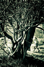 leafless tree - bush
