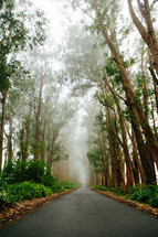 a tree lined rural road