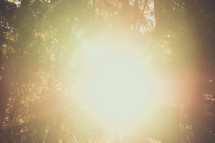 Prayer Mountain | Light Rays | Forest | Trees | Encounter | Sun Through Trees | Shine