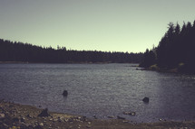 Lake in a forest | Summer