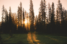 Morning Sunrise Through Trees | Summer | Trees