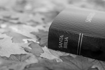 Santa Biblia onm fall leaves.