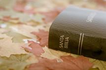 Santa Biblica