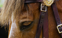 London working horse
