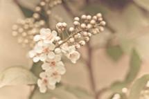 Spring wildflower.