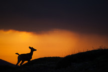 silhouette of a deer running