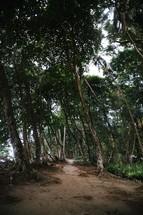 a coastal jungle