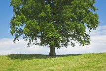 shadow under a tree