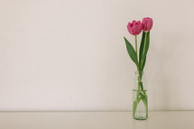 A vase with two pink tulips on a white background.