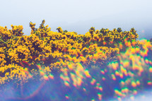 yellow wildflowers on a mountaintop