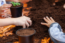 Closeup view of hands toddler planting young beet seedling in to a fertile soil