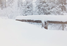 snow covered log and snowbank