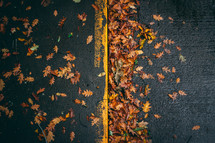 fall leaves on asphalt