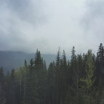 an iPhone capture of a  misty foggy mountain morning