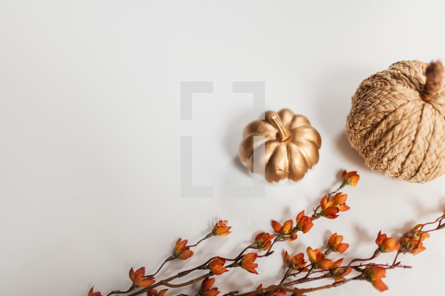 gold and textured pumpkins on a white background