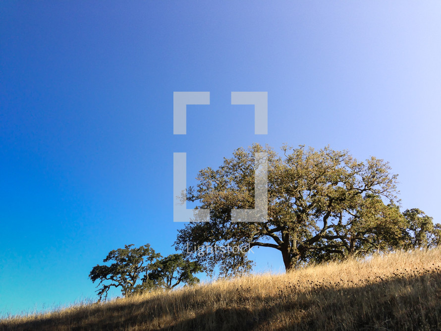 isolated tree on a hill