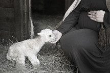 pregnant Mary petting a lamb in a stable
