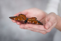 woman holding a butterfly in her hands