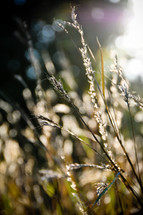 sunlight shining on tall grasses