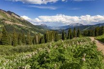green mountain forest and wildflowers