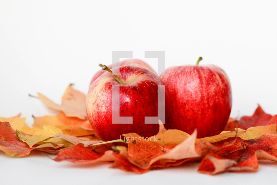 apples and leaves on a white background