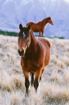 Two horses in a field of brown grass.