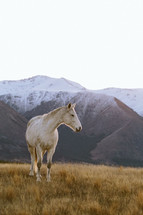 A white horse in a field among mountains.