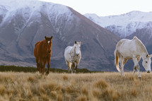 Horses in a pasture in the mountains.
