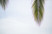 palm fronds in the sky