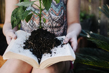 Hands holding an open book with a plant and dirt on the pages.