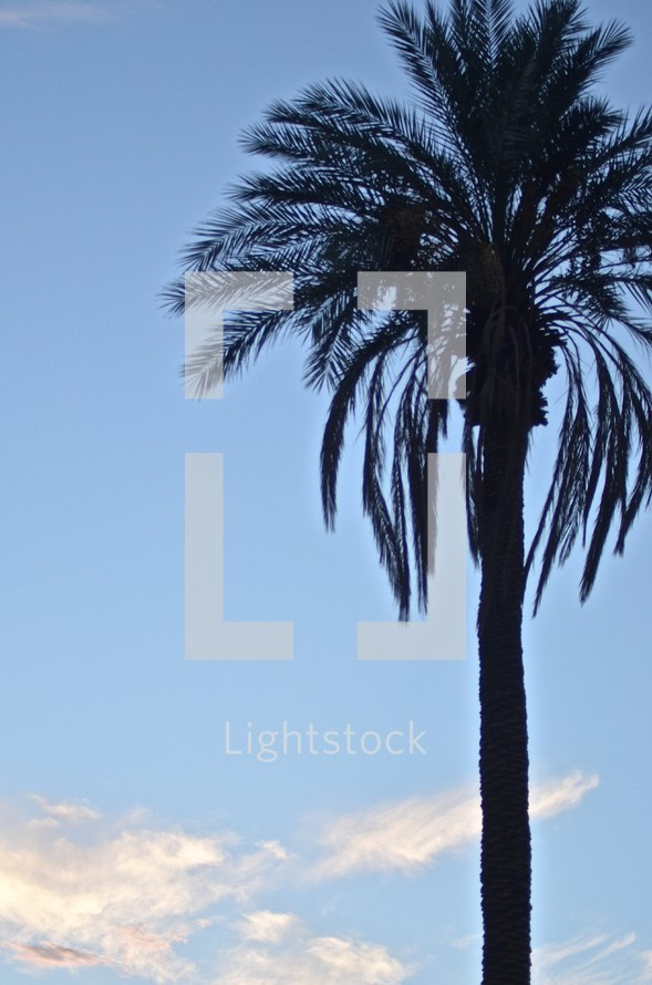 silhouette of a palm tree