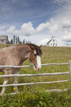 Horse in a fenced pasture with barn and church in the background.