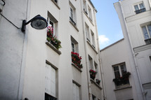 flower boxes in windows in Paris