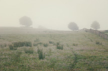 Mist on a grassy meadow.