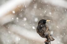a bird in falling snow