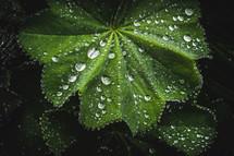 dew drops on a green leaf