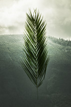 Palm frond in front of a hill