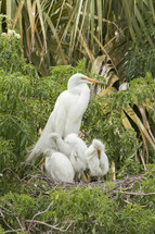 Mother stork with babies in the bushes.