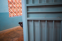 a dog peeking around a corner