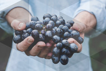 cupped hands holding grapes