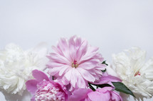 pink and white flowers on a white background