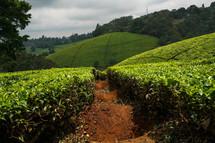 crops on a hillside